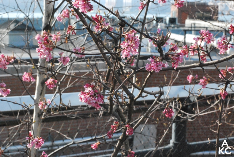 New blossoms along the Highline